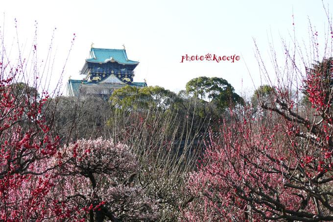 01大阪城と梅.jpg