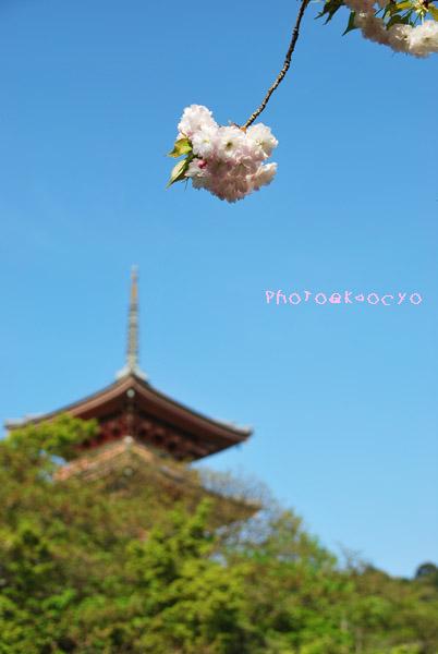 03_清水三重の塔.jpg