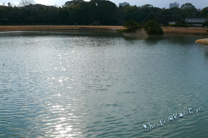 16_池のキラキラ.jpg